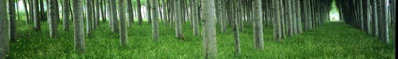 Imagen ilustrativa: bosque