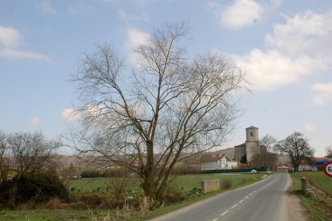 Arangiz