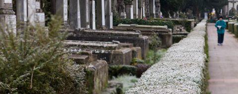Persona en el cementerio