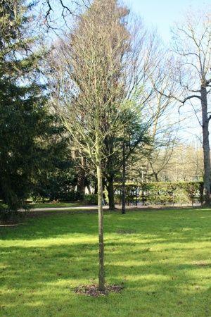Árbol del amor y placa conmemorativa