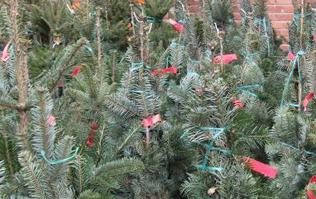 Mercado árboles Navidad