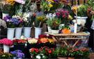Mercado flores