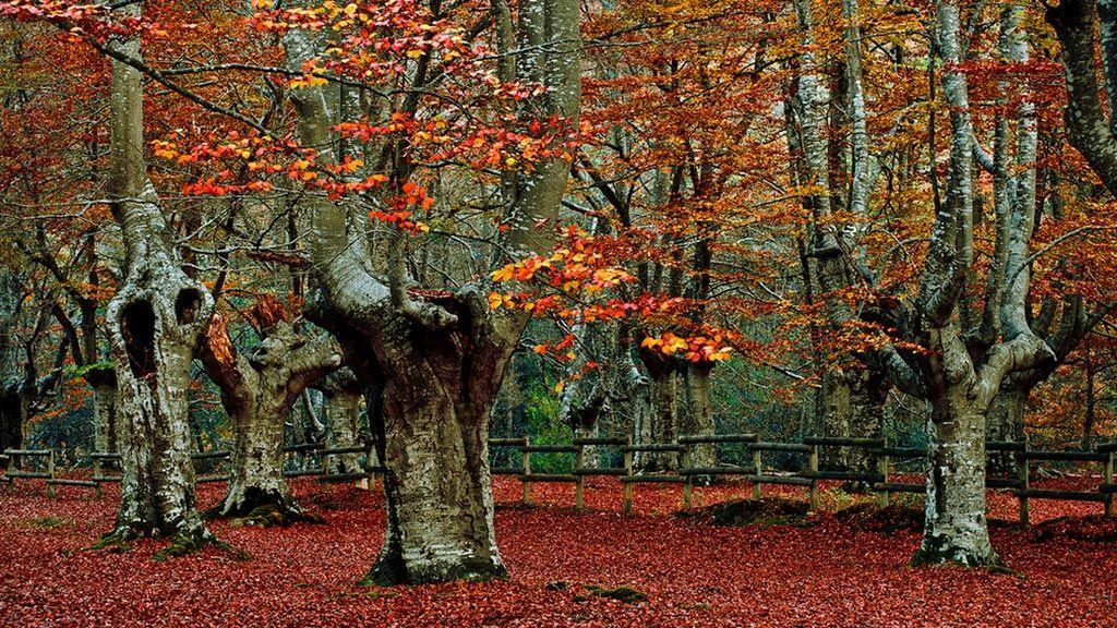 Turismo - Parque Natural Gorbeia